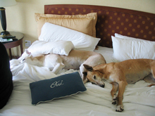 dog friendly hotels in taos new mexico